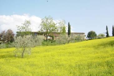 Gambassi Terme Wine