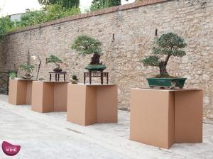 bonsai toscana