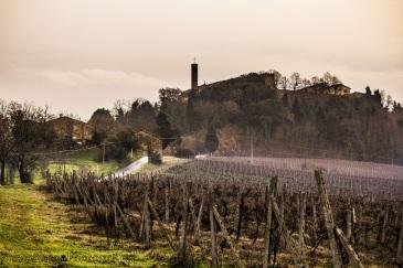 vico-delsa wine