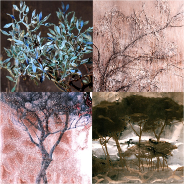 the vital tree volterra