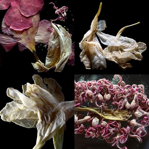 fleur evanescente - san gimignano - ristorante fuoriluogo