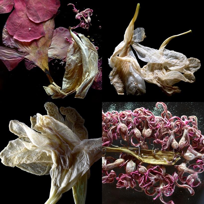 fleur evenescente - san gimignano - ristorante fuoriluogo